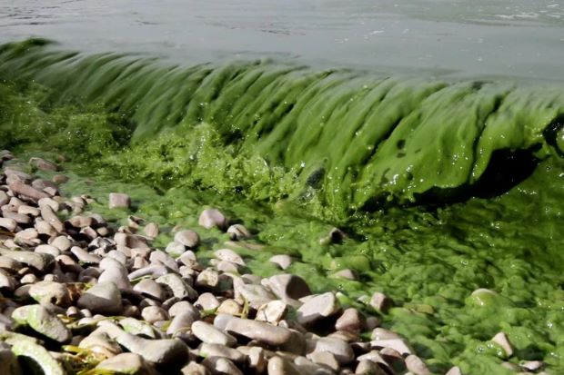 The Issue of Toxic Algal Blooms