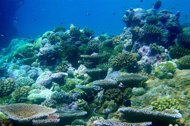 Ocean Acidification Greatly Affects Marine Ecosystem