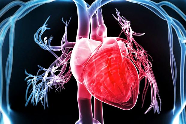 The Effects of Particulate Matter on the Cardiovascular System