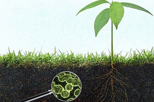 Revolutionary Soil Microbial Research Technique Helps Understand Large-Scale Environmental Cycles