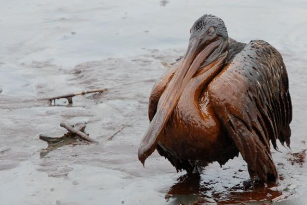 The Stages of an Oil Spill Disaster   Environmental ...